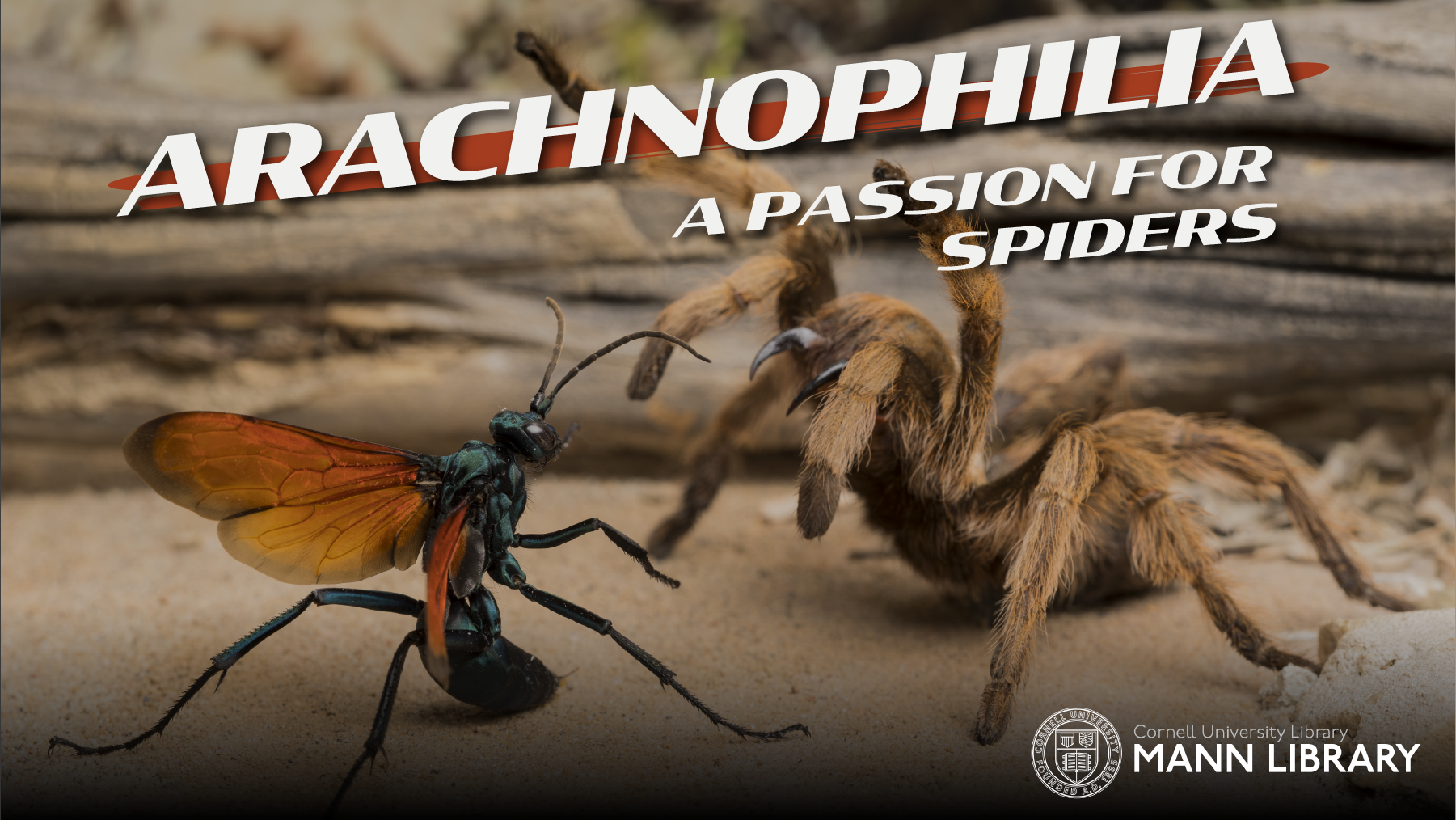 Arachnophilia Promo 2_Spotlight.png